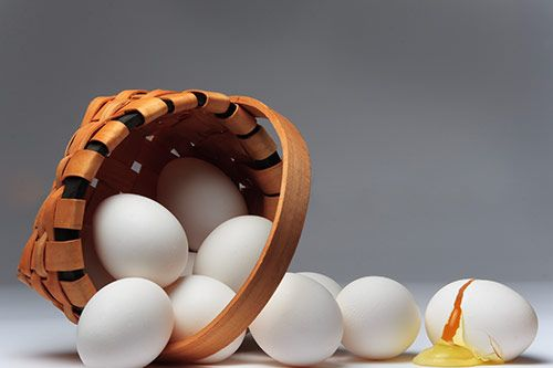 All Your Eggs gallery 2