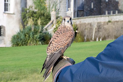 Falconry gallery 1